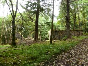 Inverary Castle Woodland Walk