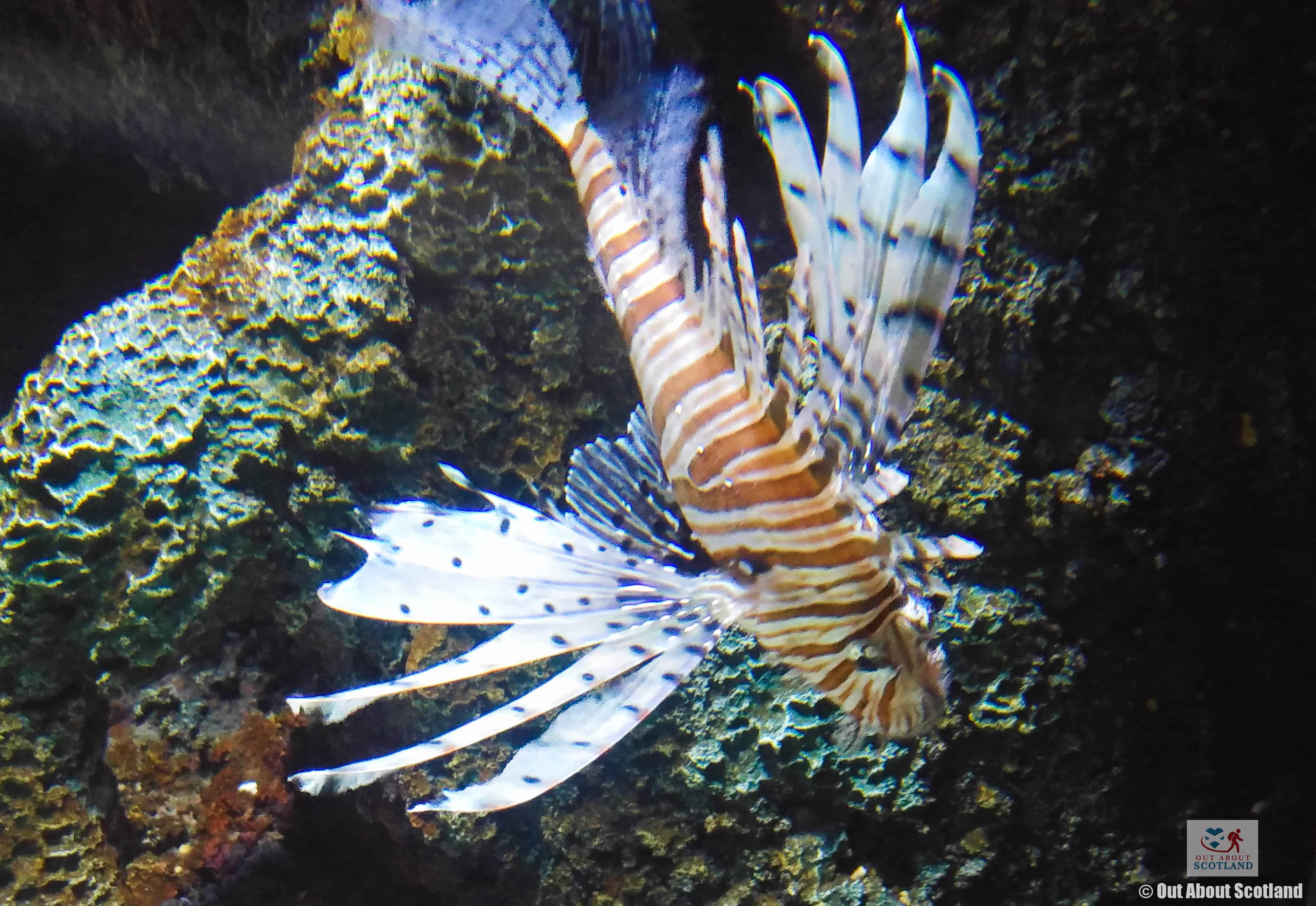 St. Andrews Aquarium Lion Fish