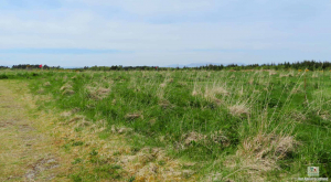 Culloden Battlefield (2 of 10)