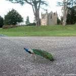 Scone Palace (4 of 5)