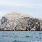 The Bass Rock (2 of 11)