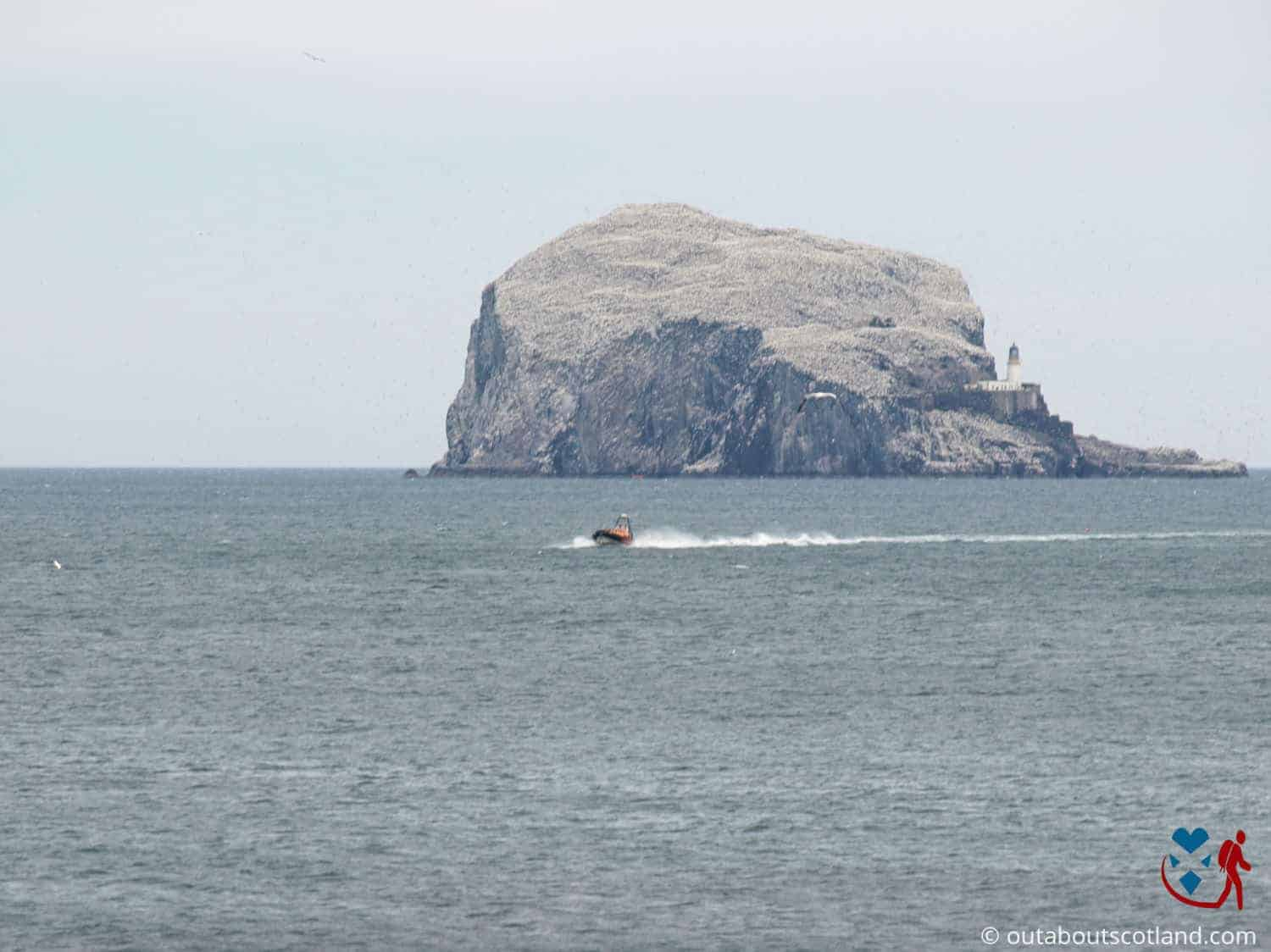 Bass Rock Boat Tour (1 of 5)
