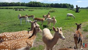 Scottish Deer Centre (3 of 3)