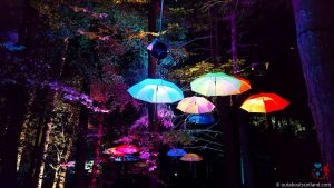 The Enchanted Forest (2 of 6)