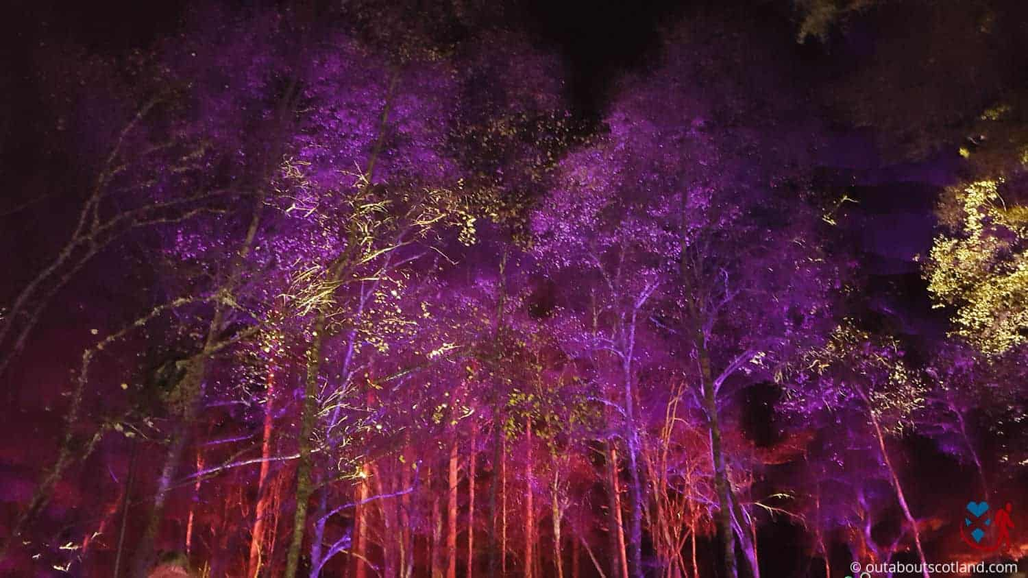 The Enchanted Forest (6 of 6)