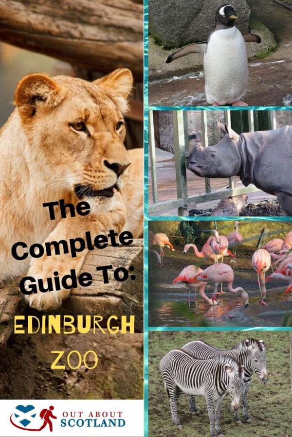 The complete guide to Edinburgh Zoo Pinterest