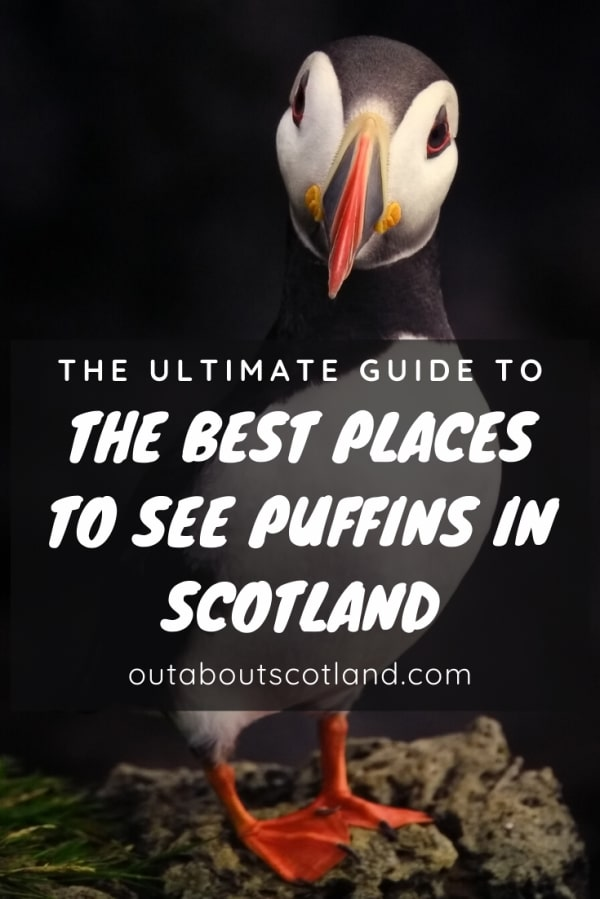 best places to see puffins pinterest