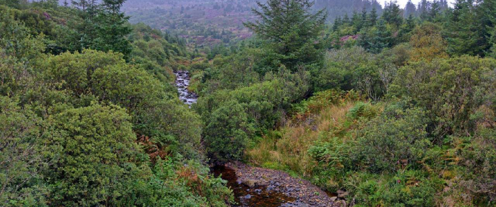 Arran Forests